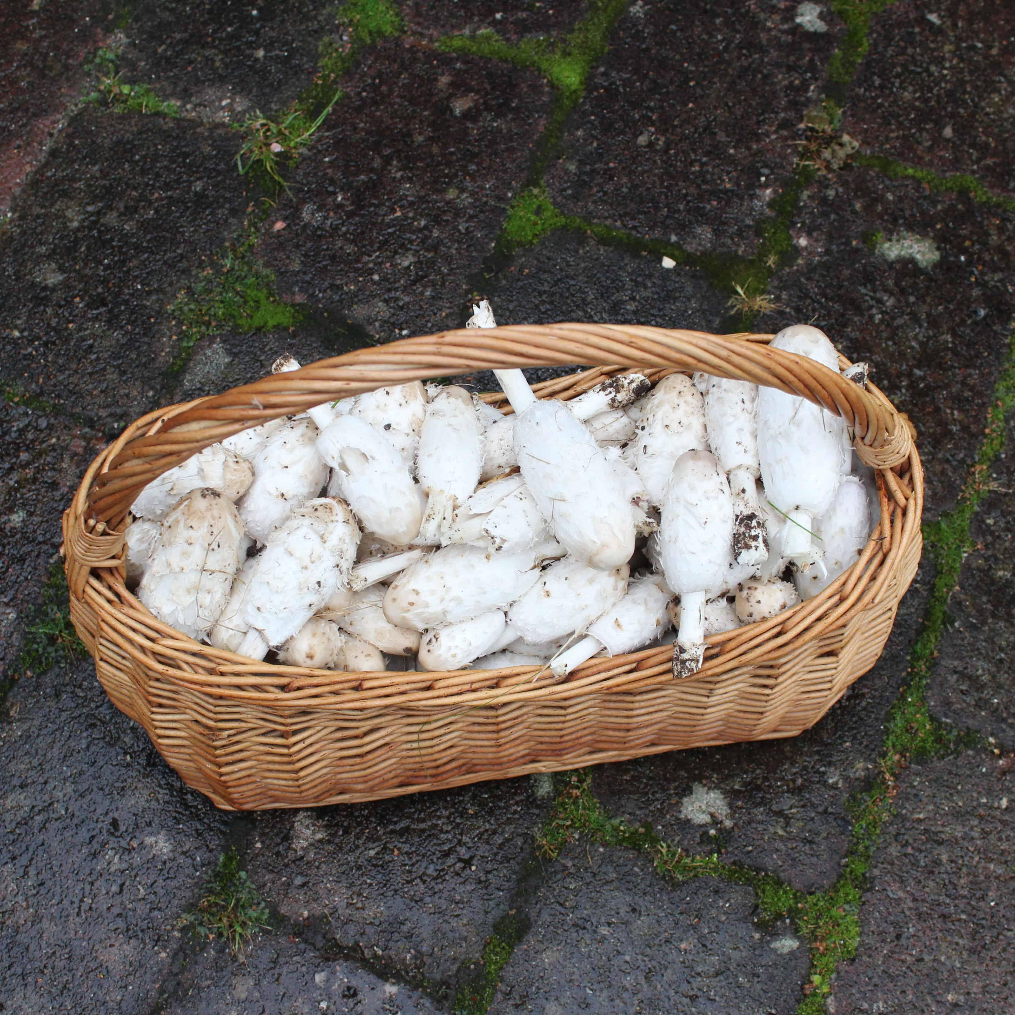Efterår er svampetid – lav retter med svampe, steg dem og gem dem til senere. Find opskrifter og inspiration til årets gang på danishthings.com #DanishThings #svampe #parykblækhat #spisesvampe #svampe-a-la-creme #svampe-toast #svampetoast #svampesauce #svampetærte #efterår #lækkert #umami